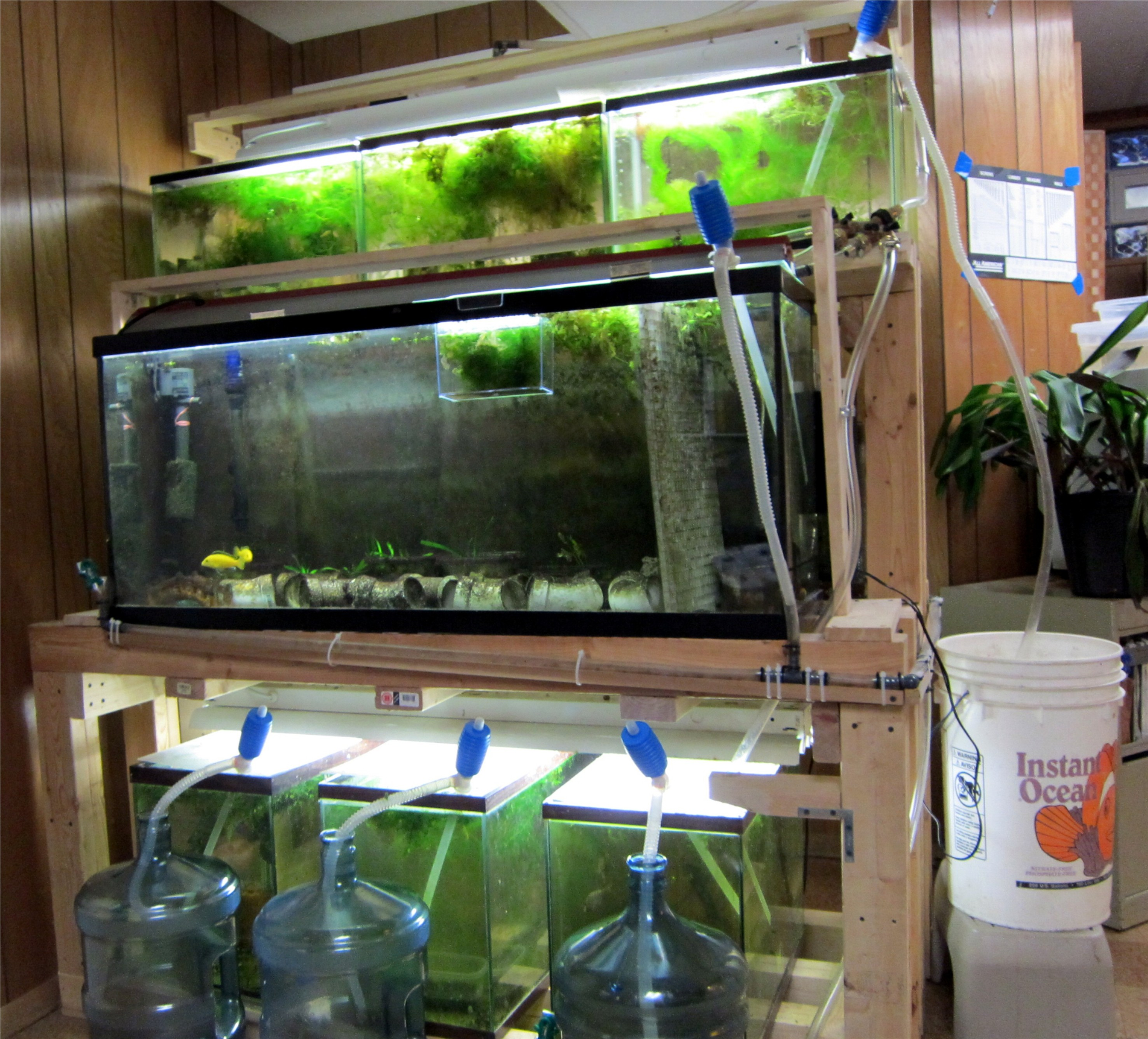 Easy Water Change System Sonny S Fish Room