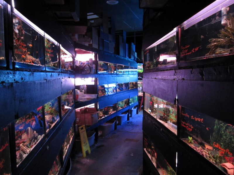 shop report rick s fish and pet supply sonny 39 s fish room